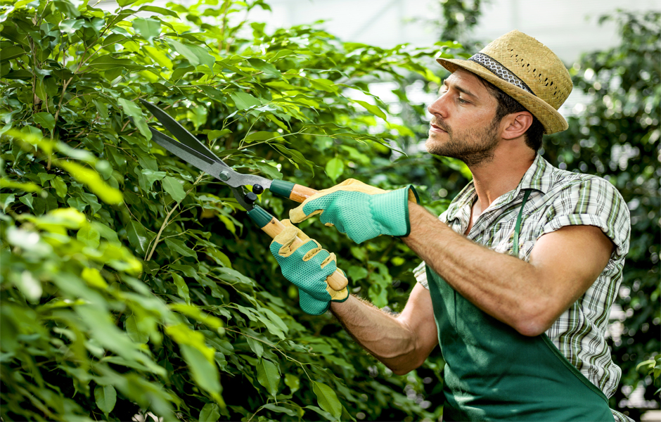 paphos-gardening